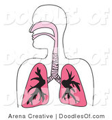 Vector Clipart of a Human Respiratory System Diagram in Pink by Arena Creative